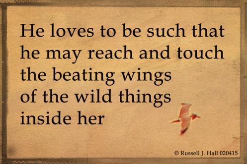 Wings_5249_s